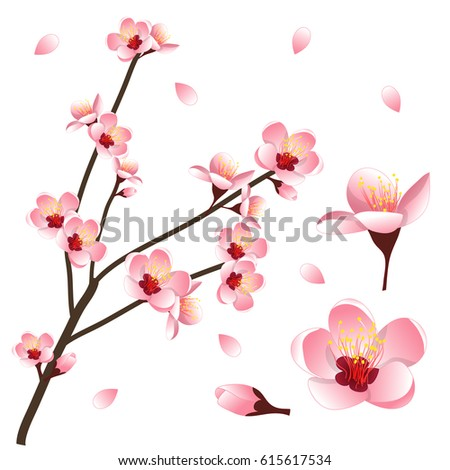 prunus persica   peach flower