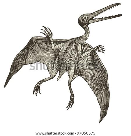 """Pterodactyl  - vintage engraved illustration - """"Dictionnaire encyclopédique universel illustré"""" By Jules Trousset - 1891 Paris"""