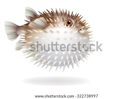 puffer fish with needles on a