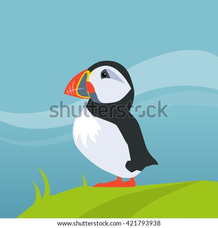 puffin bird in iceland flat