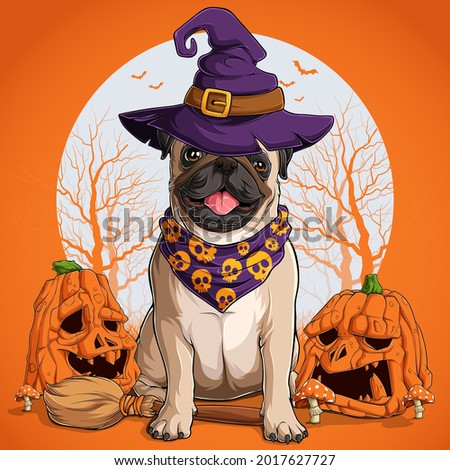 Pug dog in halloween disguise sitting on a broom and wearing witch hat with pumpkins on his sides