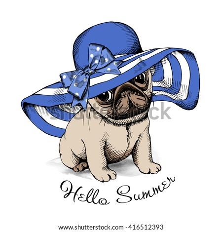 pug puppy in a blue summer sun