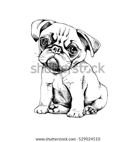 pug puppy vector black and