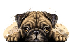 Pug. Sticker on the wall in the form of a artistic, graphic, hand-drawn color portrait of the head of a pug breed dog on a white background with splashes of watercolor.