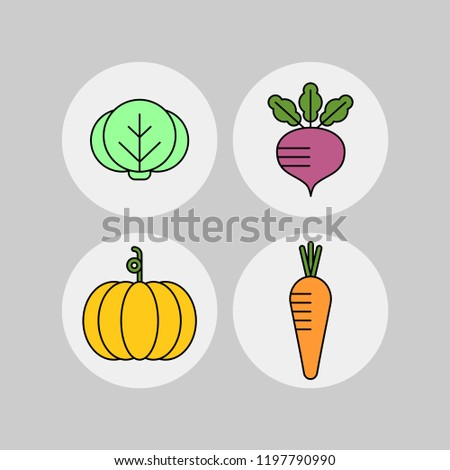 Pumkin, carrot, cabbage, beet flat vector icons