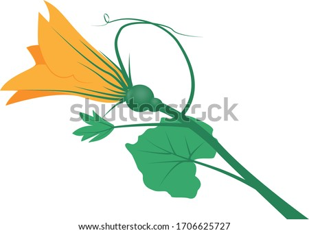 Pumpkin flower with leaves isolated on a white background.