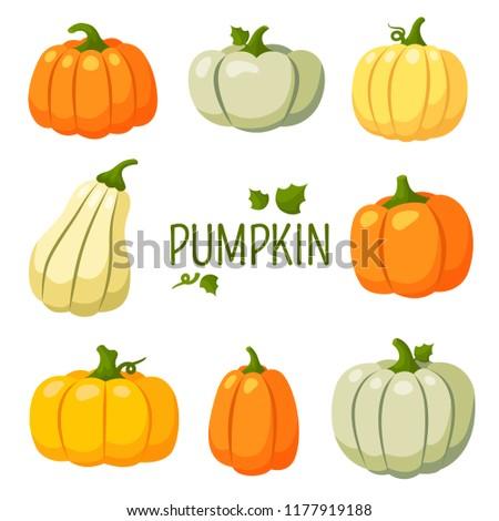 Pumpkin, Halloween, gourd, squash, harvest, colored, autumn, farm, set, items, crop, gather, garden stuff, vegetable, ripe, green stuff, fruitage, productivity of land, crop capacity, yield capacity,