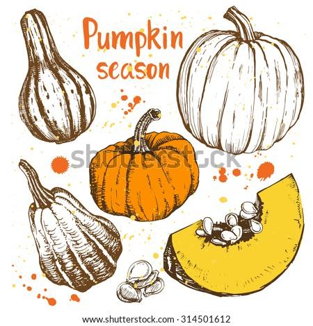 pumpkin season different