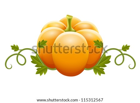 pumpkin vegetable with green leaves vector illustration isolated on white background EPS10.