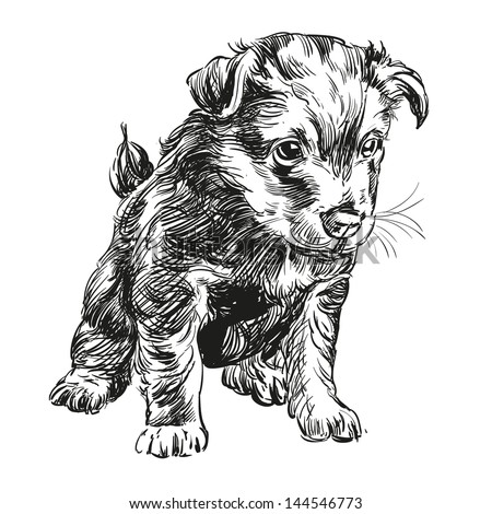 puppy dog hand drawn vector llustration realistic sketch