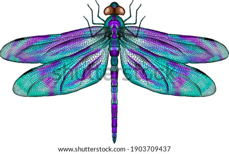 purple and blue dragonfly with