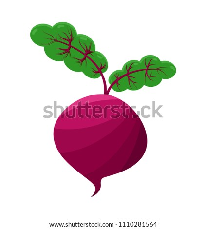 Purple beet, round vegetable with two leaves, green sprouts, tasty organic product, beetroot cartoon vector illustration isolated on white background.