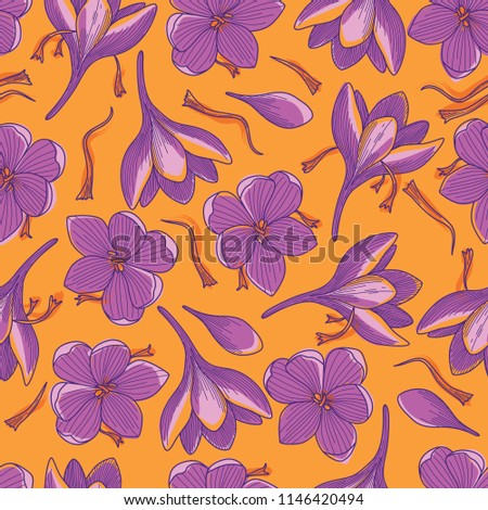 purple crocus flowers and red