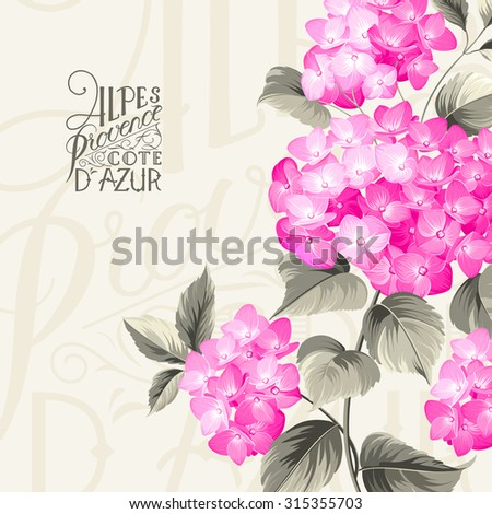 Purple flower hydrangea on calligraphic background. Mop head hydrangea flower. Vector illustration.
