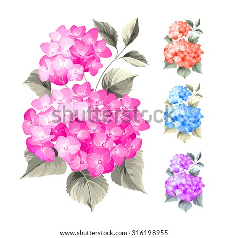 Purple flower hydrangea on white background. Mop head hydrangea flower isolated against white. Beautiful set of colored flowers.Vector illustration.