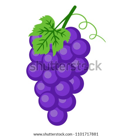 Purple Grapes Illustration - Bunch of purple grapes with stem and leaf isolated on white background