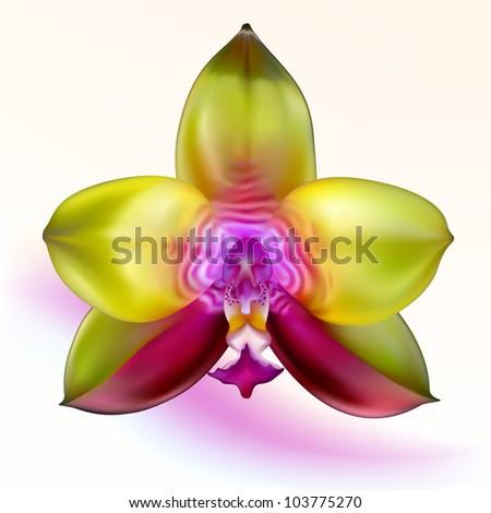 purple green orchid flower on