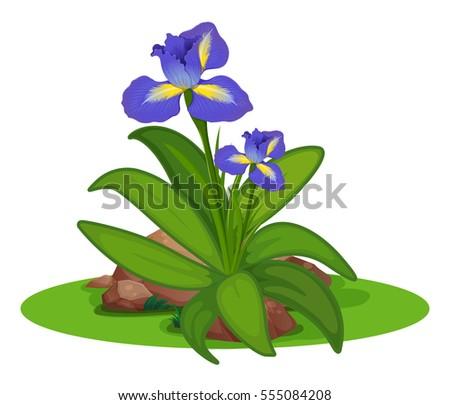 Purple irish in the bush illustration