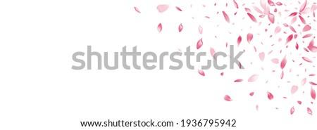 Purple Lotus Petal Vector Panoramic Background. Transparent Japanese Flower Petal Frame. Rose Petal 3d Template. Fresh Sakura Petal Texture.