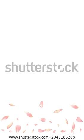 purple lotus petal vector white