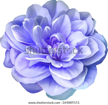 purple pink camellia rose