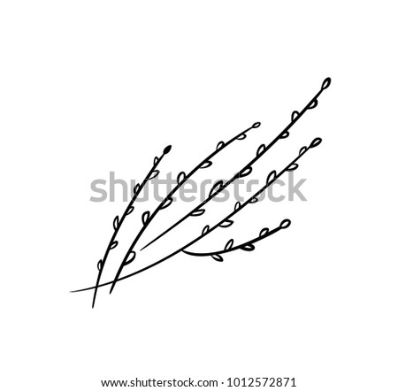 pussy willow illustration