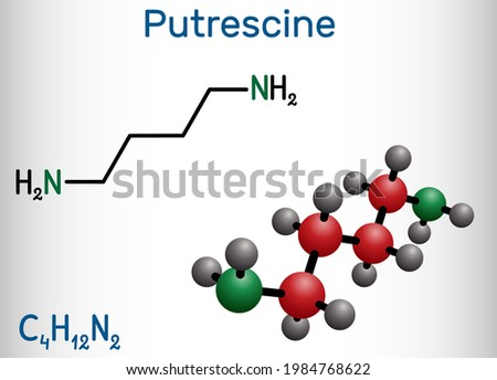Putrescine molecule. It is toxic diamine, it belongs to the group of biogenic amines. Structural chemical formula and molecule model. Vector illustration