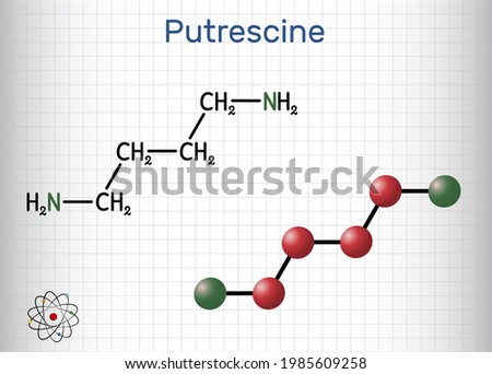 Putrescine molecule. It is toxic diamine, it belongs to the group of biogenic amines. Structural chemical formula and molecule model. Sheet of paper in a cage. Vector illustration