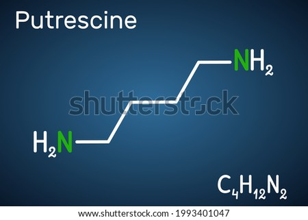 Putrescine molecule. It is toxic diamine, it belongs to the group of biogenic amines. Structural chemical formula on the dark blue background. Vector illustration