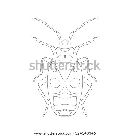 pyrrhocoris apterus beetle