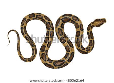 python vector illustration