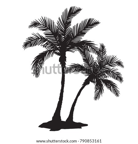 quality detailed tropical palm