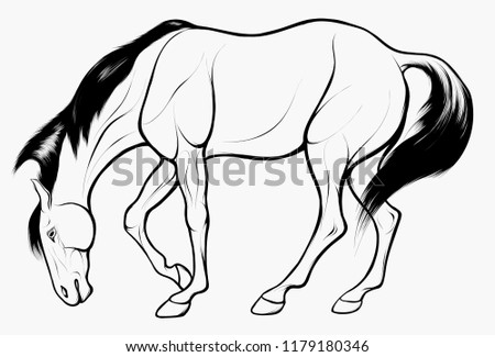 quick sketch of horse grazes at