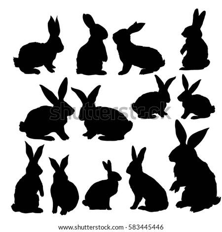 rabbit animal- vector, illustration