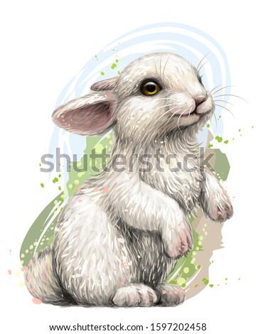 rabbit color  artistic