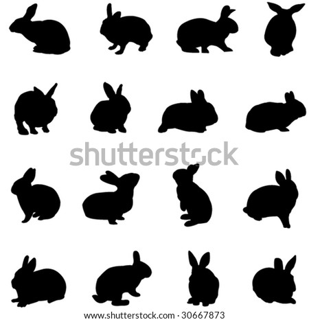 rabbit from all over the world
