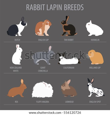 Rabbit, lapin breed icon set. Flat design. Vector illustration