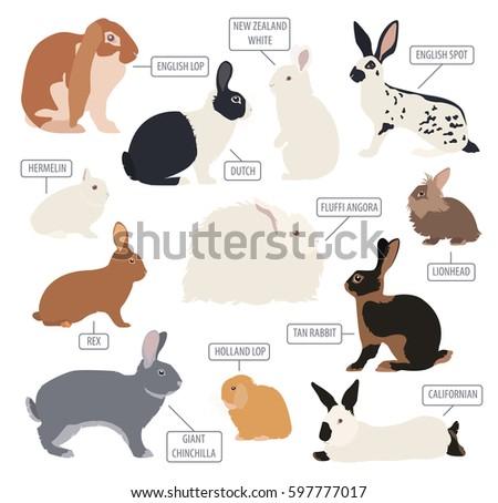 Rabbit, lapin breed icon set. Flat design. Vector illustration