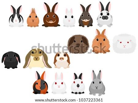 rabbits border set