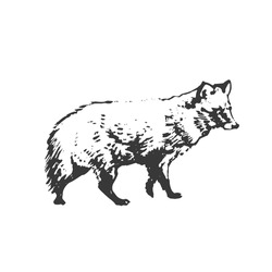 Raccoon dog, graphic grunge hand drawing. Side view.