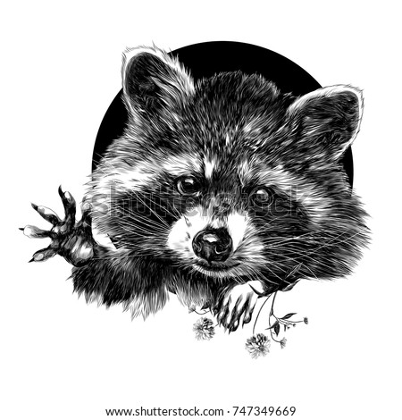 raccoon sketch vector graphics