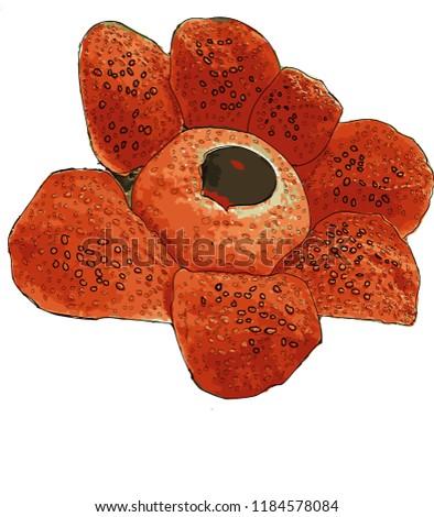 rafflesia blooming at gading