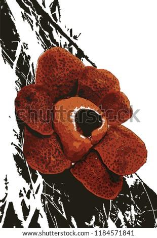 rafflesia blooming at gunung
