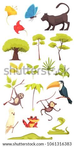 rain forest jungle inhabitants