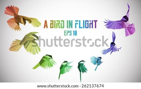 rainbow bird in motion low