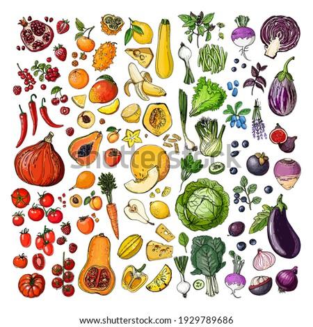 Rainbow vegetables and fruits, berries. vector sketch of food. Pumpkins, apples, bananas, cabbage, tomatoes.