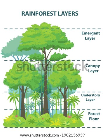 Rainforest layers educational banner or poster. Jungle vertical structure educational scheme. Emergent, canopy, understory and floor levels. Flat vector illustration