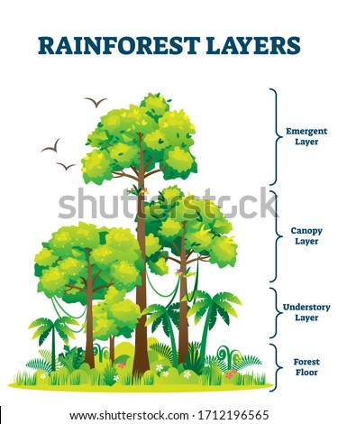 Rainforest layers vector illustration. Jungle vertical structure educational scheme. Graphic with emergent, canopy, understory and floor levels. Amazon woods botanic explanation with flora and fauna.