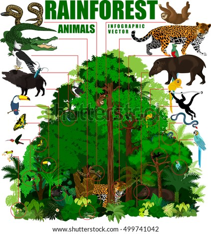 rainforest vector illustration