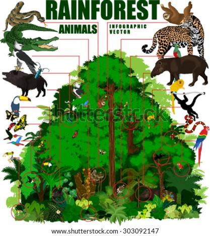 rainforest vector infographic